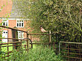 Cock of the farm - geograph.org.uk - 593831.jpg