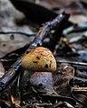 Cogumelo no Vale Encantado - Salvador, BA.jpg
