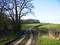 Colley Broach Road east of Newburgh Priory - geograph.org.uk - 354995.jpg