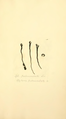 Coloured Figures of English Fungi or Mushrooms - t. 438.png