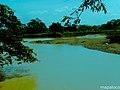 Confluencia de los Rios LaBu y Prinzapolka. - panoramio.jpg