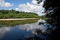 Congaree River (8224346575).jpg