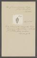 Conus jaspideus - - Print - Iconographia Zoologica - Special Collections University of Amsterdam - UBAINV0274 085 10 0047.tif