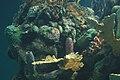 Coral reef at Epcot.jpg