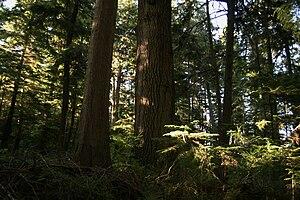 Cormorant Island (British Columbia) - Cormorant Island is heavily forested.