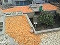 Corn on roof (Sohail Aziz 0323-2600009) - panoramio.jpg