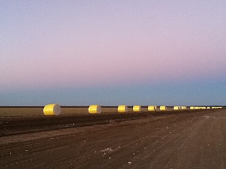Warren, New South Wales - Purple sunrise over the white and gold cotton, taken from farm in Warren