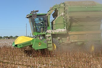 Cotton harvest on the South Plains near Lubbock, Texas. Producer is preparing to lower the header on the cotton stripper to begin pulling cotton. (24486620124).jpg
