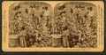Cotton is king - A plantation scene, Georgia, by Strohmeyer & Wyman 2.png