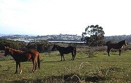 Horses on an Eden propertyeden town