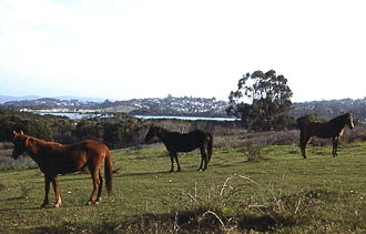 Eden, New South Wales - Horses and the town in the background
