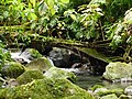 Cours d'eau et Biotope (3).jpg