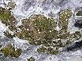 Cova d'en Marc P1070433.JPG