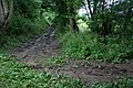 Crossroads in the wood - geograph.org.uk - 501817.jpg
