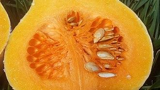 Butternut squash - Butternut squash cut lengthwise showing seed