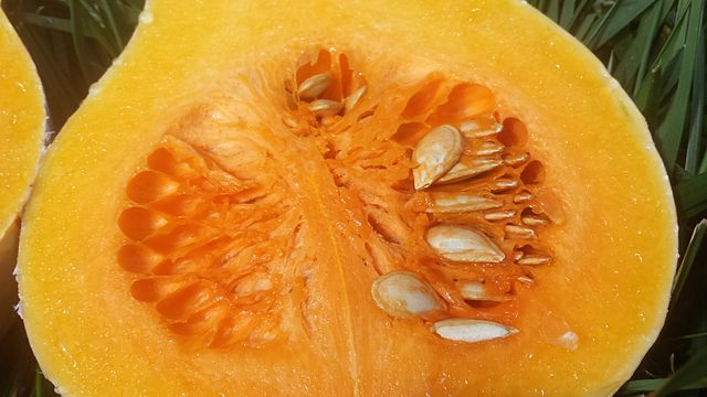 Butternut squash cut lengthwise showing seeds Cucurbita moschata 'Butternut' 3.jpg