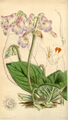Curtis's Botanical Magazine, Plate 4284 (Volume 73, 1847).png
