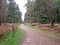 Cycle route through Denny Lodge Inclosure, New Forest - geograph.org.uk - 267066.jpg