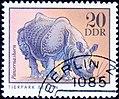 DDR. 20. Panzernashorn.jpg