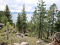 DSC02791, South Lake Tahoe, Nevada, USA (6958075900).jpg