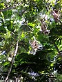 Daintree National Park, Queensland 12.jpg