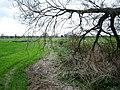 Damaged Tree in a Flat Landscape - geograph.org.uk - 1245595.jpg