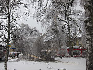 Freezing rain - Thick layer of glaze broke the trees in downtown Ljubljana, Slovenia.