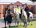 Day 97 - West Midlands Police - Police horses near Villa Park.jpg