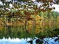 Dead Lake, Delamere - geograph.org.uk - 64934.jpg