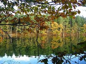 Delamere Forest - Dead Lake