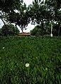 Deep 024 - panoramio.jpg
