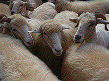 Deep Dream of Electric Sheep.jpg