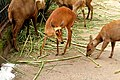 Deer - panoramio (17).jpg