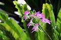 Dendrobium 03- (1) 1200.jpg