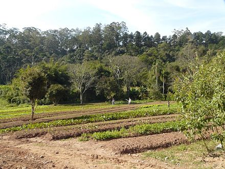 Bio-dynamic garden in Horizonte Azul that provides the Associacao Comunitaria Monte Azul with its fruit and vegetables. Orta.JPG