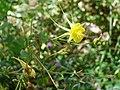 Desert Botanical Gardens 6-7 (22424213774).jpg