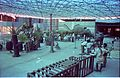 Dinosaurs Alive Exhibition in Progress - Science City - Calcutta 1995-June 379.JPG