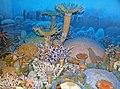 Diorama of a Devonian seafloor - corals 4 (30717353687).jpg