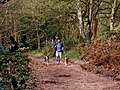 Dog walking in Kingsford Forest Park - geograph.org.uk - 886496.jpg