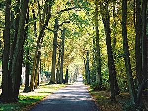 Domaine du Lys-Chantilly - Domaine du Lys-Chantilly, Grande Avenue