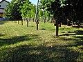 Dorotowo Cmentarz Wojenny 1914 - 1918 miejsce spoczynku żołnierzy niemieckich i rosyjskich m.jpg