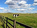 Down Farm Land near Worlds End - geograph.org.uk - 34268.jpg