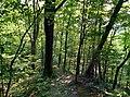 Downhill - panoramio (8).jpg