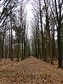 Drongengoedbos - panoramio.jpg