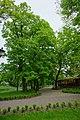 Drzewa w parku - panoramio.jpg
