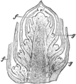 EB1911 Stem Fig 3.png
