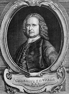 image of George Edwards from wikipedia