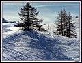 Effetto neve - panoramio.jpg