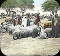 Egypt, Market at Kasr-en-Nil (1).jpg