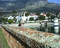 Egyptian Goose, Molteno Reservoir, Cape Town.jpg